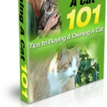 Cat training guide – How to care your cat