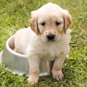 100 Dog Training Tips