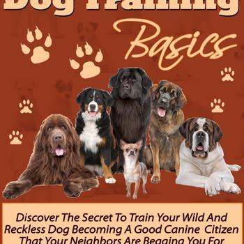 The Basics of Dog Training