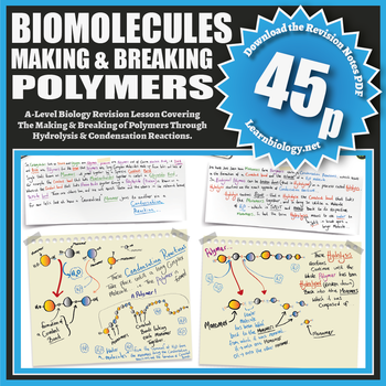 Biomolecules: Making and Breaking Polymers.